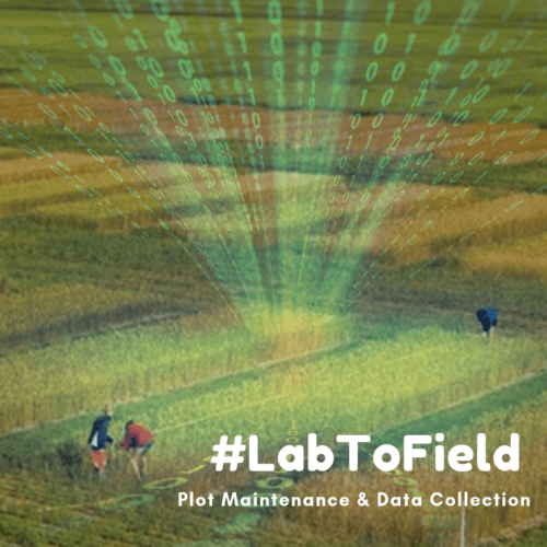 Data Collection #LabToField