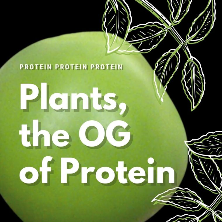 plants are the OG of protein