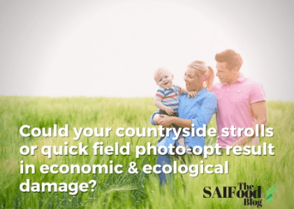 Could countryside strolls result in economic and ecological damage?