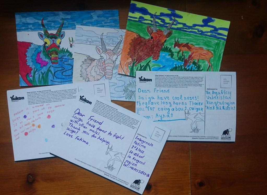 Distant saiga penpals – Saiga Conservation Alliance