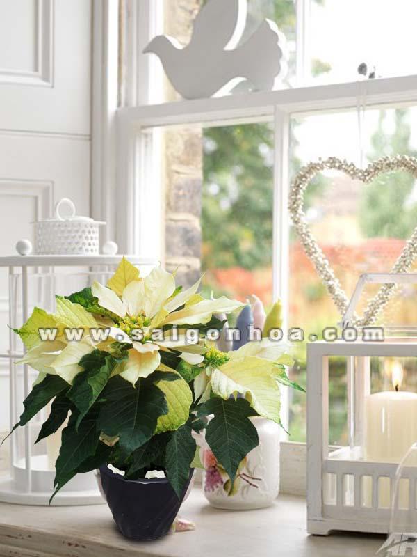 hoa-trang-nguyen-vang-45