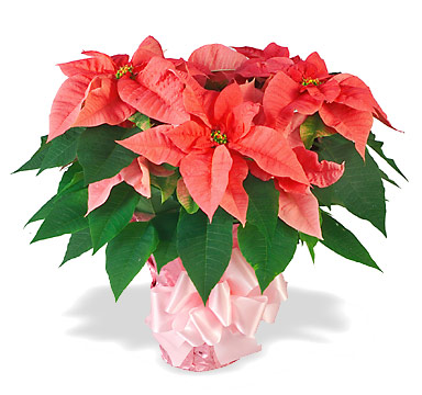 hoa trang nguyen