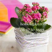 hoa song doi kep hong