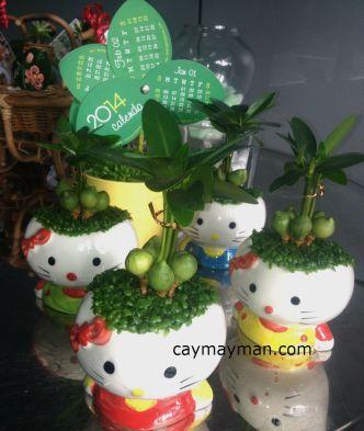 cay may man meo kitty (2)