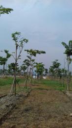 cay dang huong (3)