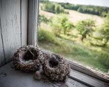 Två upphittade fågelbon i verandafönstret