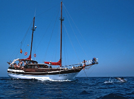 cetaceos-navegacion-karyam_redim