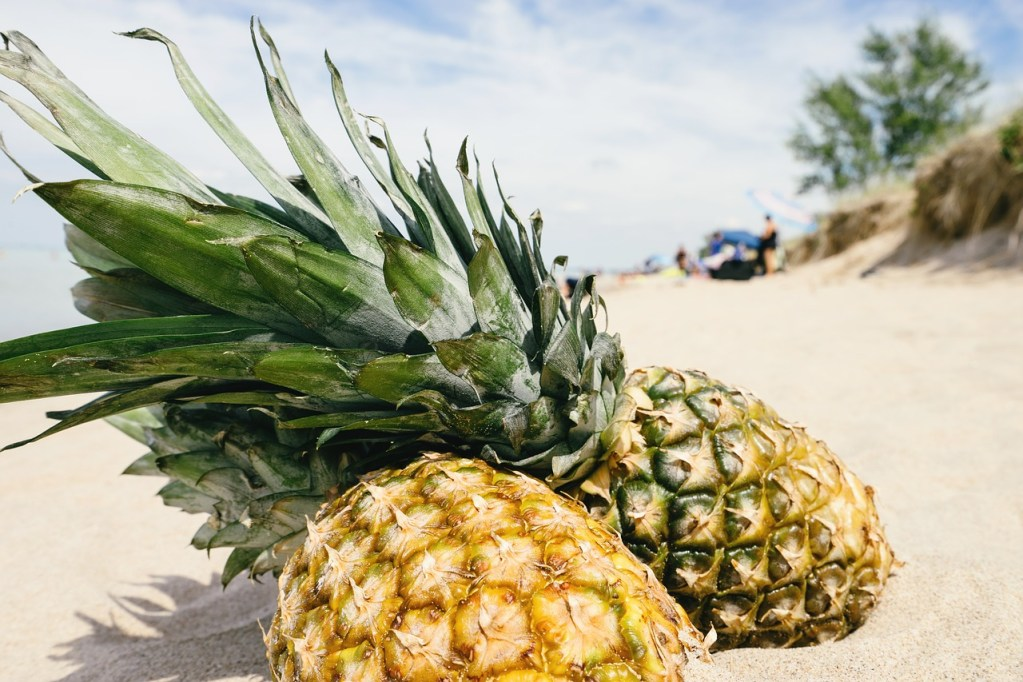 Pineapples in the sand on a beach
