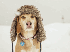 Dog with winter hat