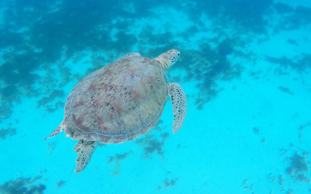 Wunderbare Tierwelt in den Grenadinen