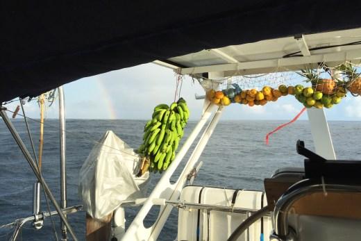 galapagos marquesas fruechte