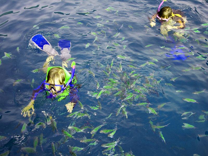 Sailing Vacation In Thailand Snorkeling Sailing Phuket