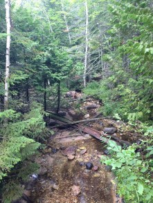 Walking Trail Creek