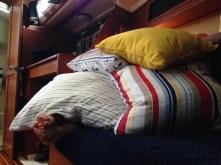 Pillow fort!!