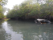 On a dinghy ride through some of the mangrove forests, we found this abandoned ship. I think it's been here awhile.