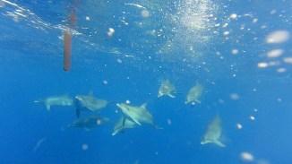 Es folgen dutzende Delfinbilder