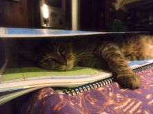 Boo Kitty napping with his favorite napping buddy: Explorer Charts!