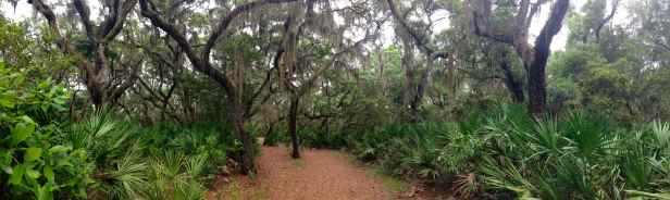 Pano of the trail. The live oaks and spanish moss make this place seem magical!
