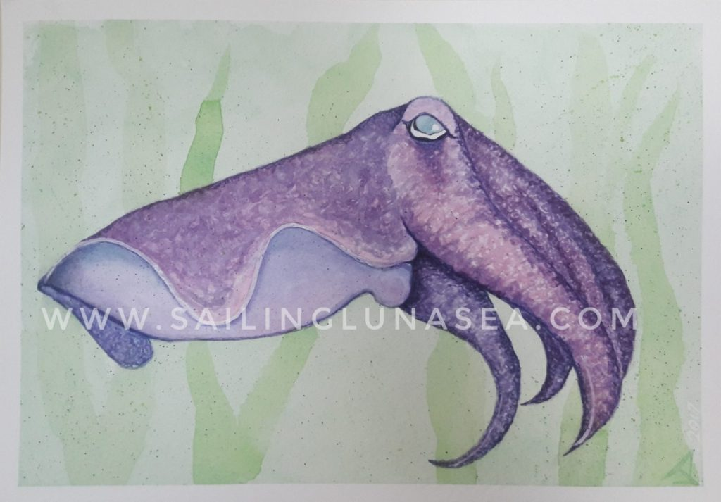 sailing luna sea original watercolor cuttlefish painting art