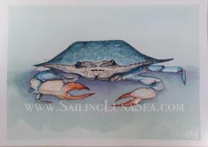 sailing luna sea watercolor blue crab