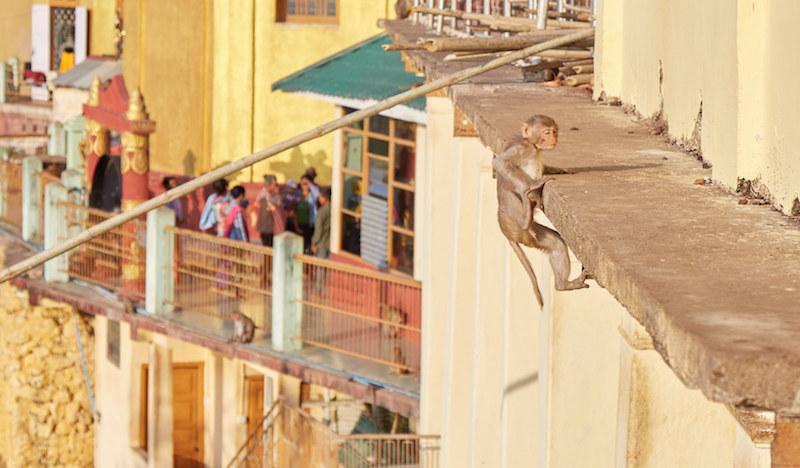Bagan Monkeys
