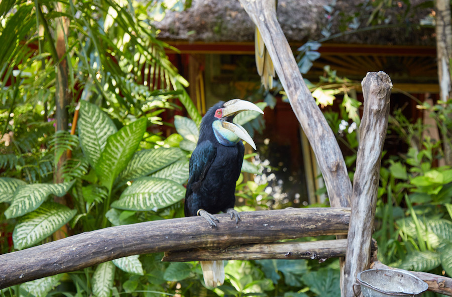 Blanco Museum Bird Ubud