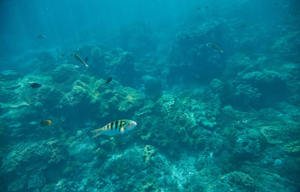 what to do in nusa lembongan snorkeling
