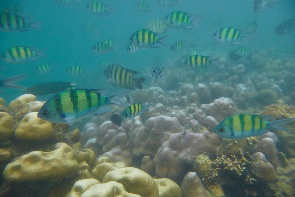 Koh Phi Phi Snorkeling