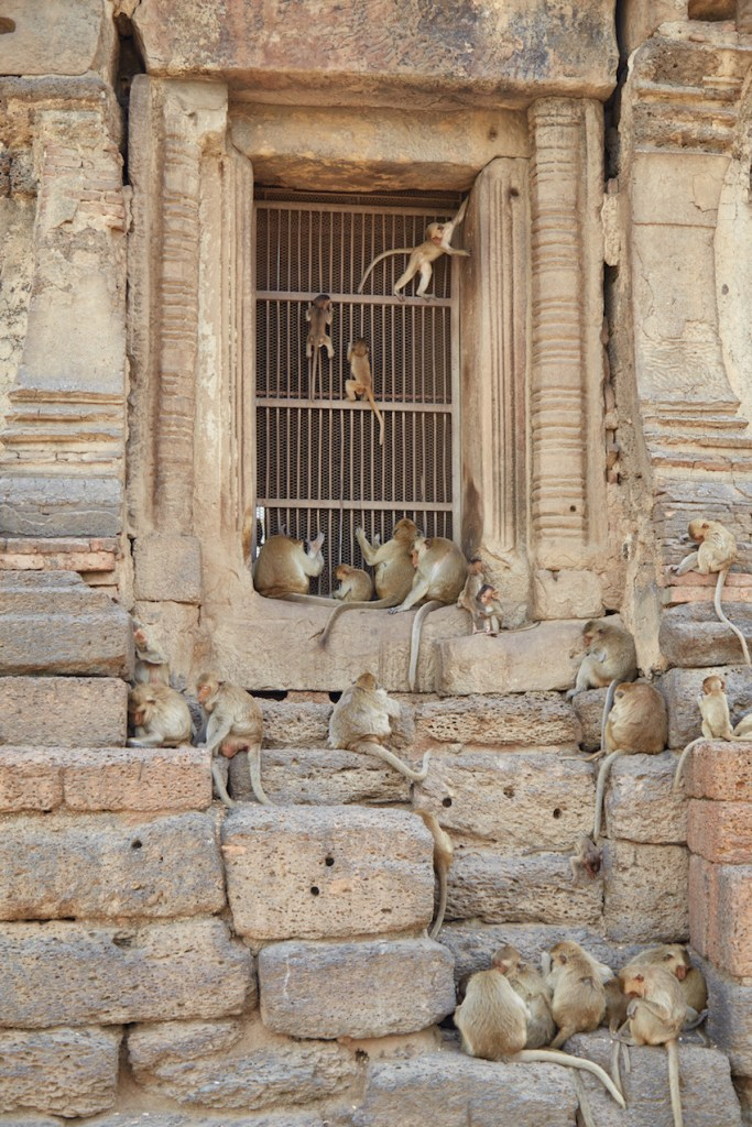 Lopburi Monkey Temple Vertical