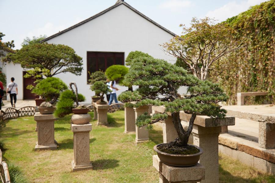 Humble Administrator Bonsai Garden Suzhou