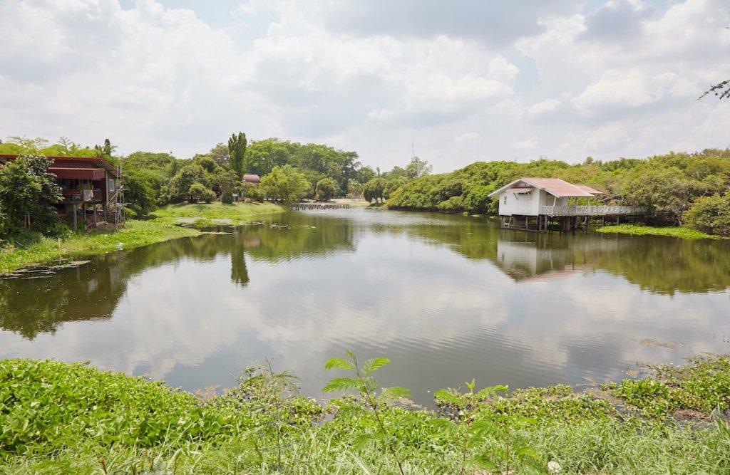 Phimai Sai Ngam Banyan Tree
