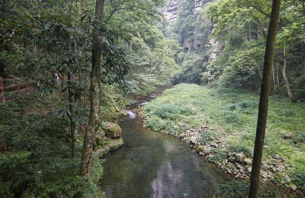 Zhangjiajie National Park Golden Whip Stream