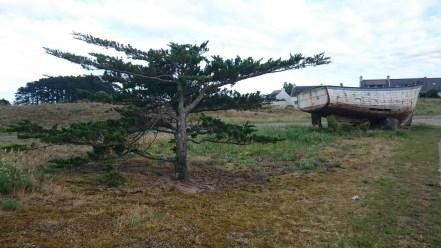 Sur Hoedic, les arbres font pas les malins