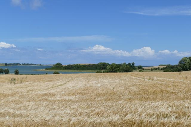 Samsø fields