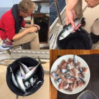 Mackerel fishing!