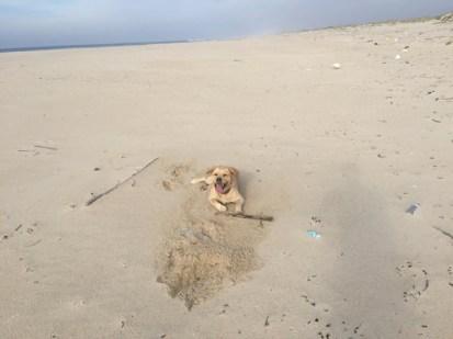 Our temporarily Sao Jacinto beach-friend