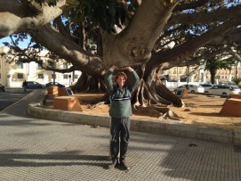 Old Ficus tree in Cádiz