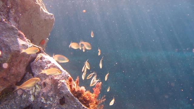 Swimming in an aquarium