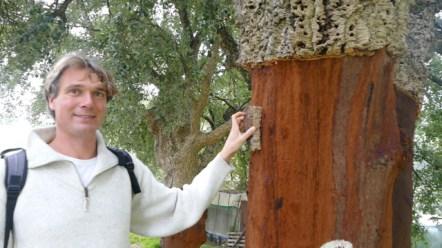Cork harvested