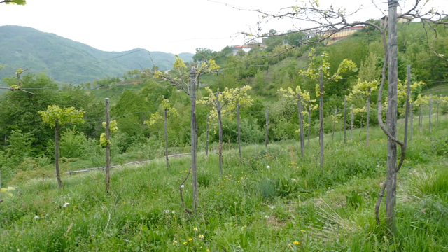Permaculture vines