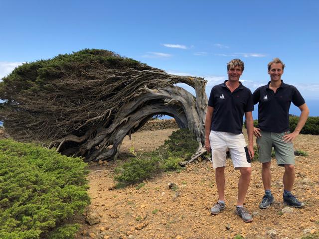 El Sabinar on El Hierro, a tough tree on a windy spot