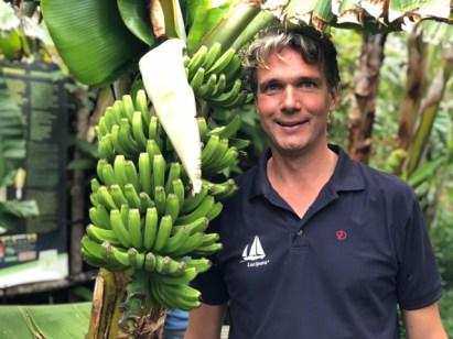 Fran's natural bananas