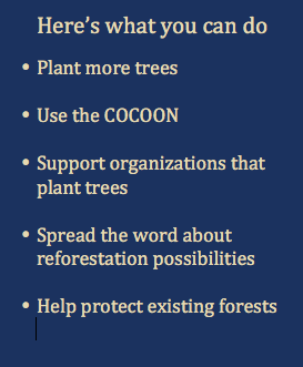 What you can do on Reforestation