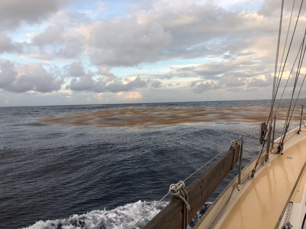 Seaweed fields