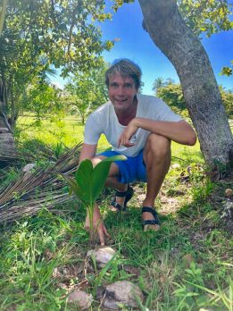 Tough coconut seedling