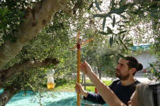 Markos demonstrates tree-friendly cultivation methods