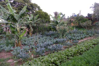 Productive organic neighborhood farm