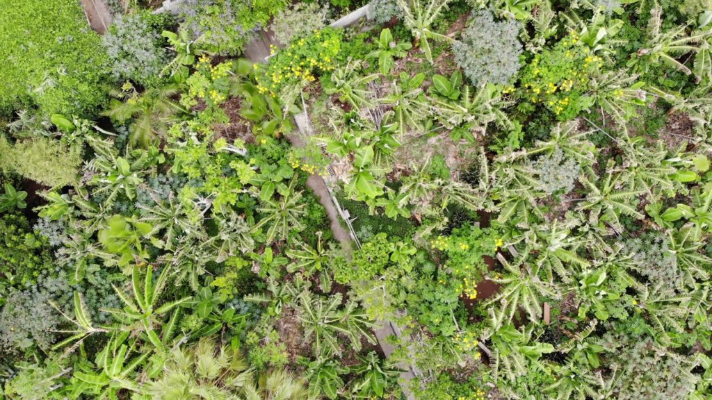 Biodiversity from above
