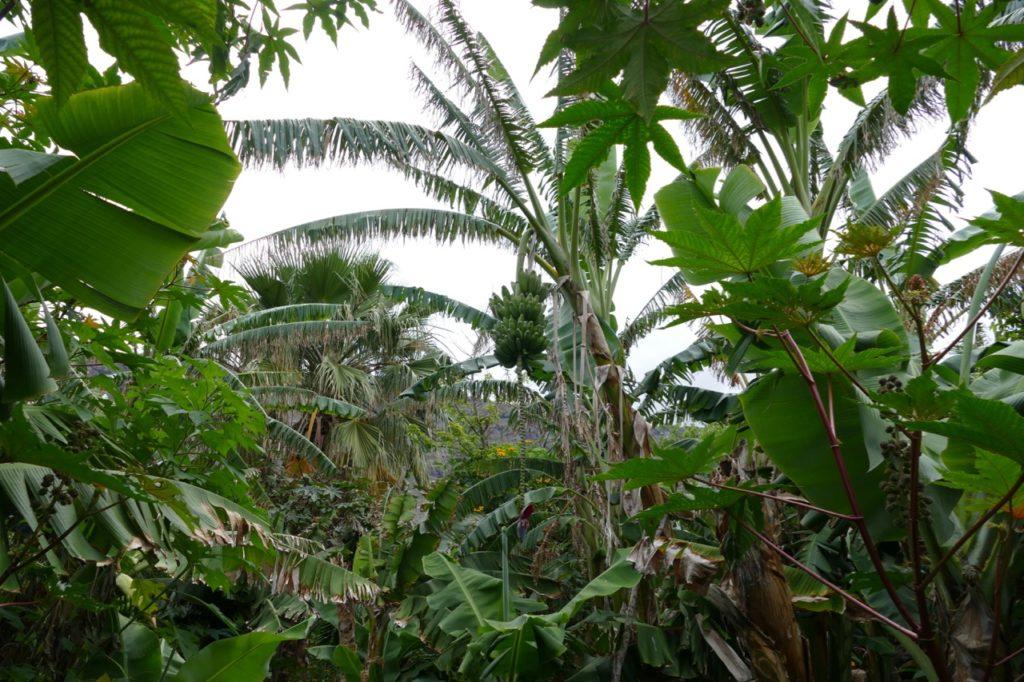 Diversity is key in Frans banana jungle