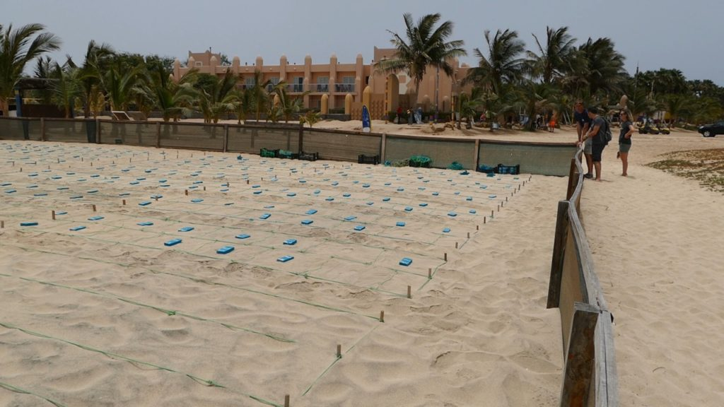 The Hatchery - where sea turtle eggs are kept safe - is neighbouring a resort